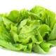 Lettuce / Leafy Greens