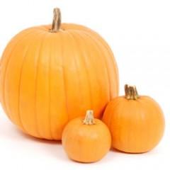 Pumpkins / Gourds