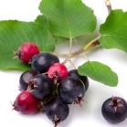 Unusual Fruit