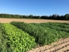Cover Crops in Veg Production Webinar