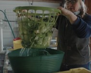 Produce Safety School -- Sanitary Design and Practice Considerations for Your Farm