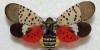 Spotted Lanternfly Webinars