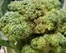 Erie/Niagara Regional Vegetable Meeting
