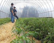 Vegetable Pest and Cultural Management Field Meeting for Auction Growers (Ontario)