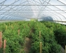 High Tunnel School: Getting the Most from Your High Tunnel - Basics and Warm Season Crops