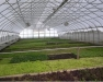 High Tunnel School: Winter Greens and Tour