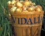 Winter Wednesday Lunch Webinar: Sweet Onions - Cultural Practices and Brand Marketing