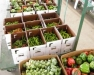 Finger Lakes Produce Auction Meeting