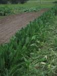Walk and Talk: Crop Planning