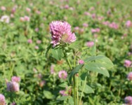 Building Fertility Through Cover Crops - Cancelled