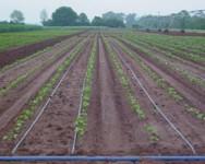 Trickle Irrigation/Fertigation Workshop - Cancelled