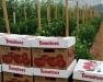 Erie Vegetable Growers Meeting - High Tunnel School