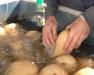 Clean Up Your Veggies! Post-Harvest Handling System Workshop