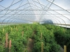 High Times with High Tunnels: Greenhouse/High Tunnel Tomato Workshop