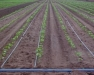 Irrigation Water Regulations, Traceability, and Recall: Info for Produce Farmers Concerning FSMA