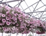 Seneca Produce Auction Greenhouse Growers Meeting