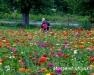 Twilight Meeting: Vegetable Walk and Cut Flowers