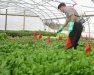 High Tunnel Pest and Disease Management