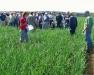 Oswego County Onion Growers Twilight Meeting