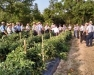 2016 Vegetable Pest and Cultural Management Field Meeting - Seneca County