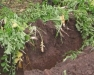 Finger Lakes Soil Health Discussion Group Field Meeting