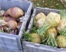 Farm Food Safety Workshop (Broome County)