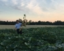 2017 Vegetable Pest and Cultural Management Field Meeting - Seneca County