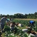 Marketing Your Farm as a Great Place to Work