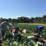 What is my job?  Hiring, training and evaluating farm employees effectively