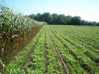 Cover Crop and Soil Health Field Day
