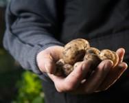Potato Advisory Meeting