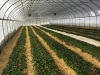 Winter Growing Field Trip to Pleasant Valley Farm