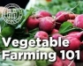 Erie County Beginning Farmer Discussion Group: Vegetable Farming 101