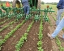 Greater WNY Veg Farming Collaborative Teach-In: In-Row Cultivation Demo