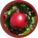 *POSTPONED* Tree Fruit IPM for Employees