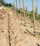 LOF Summer Fruit Series - Managing Irrigation in Apple Orchards this Season!