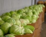 Storage Crop Facility School: Large-Scale Vegetable (Potato and Cabbage)