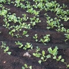 CVP Soil Health