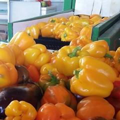 CVP Food Safety