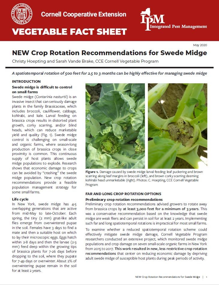 Cover image of New Crop Rotation Recommendations for Swede Midge fact sheet.