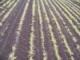 2009 Elba Muck Soil Nutrient Survey Summary
