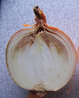 Role of Adjuvants in Bacterial Diseases of Onions