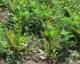 2016 Beet Herbicide Chart
