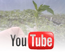 Grafting Tomatoes Video: The Motivation and Benefits of Grafting