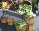 Farmers Markets in the Finger Lakes Region