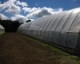 Site Selection for High Tunnels