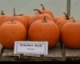 2015 CCE ENYCHP Pumpkin Variety Trial