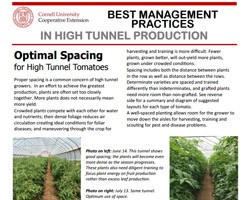 Best Management Practices in High Tunnel Production: Optimal Tomato Spacing