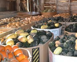 Storage Conditions for Squash