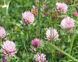 Adding Cover Crops to Your Farm? Consider the Herbicide Rotation Restrictions